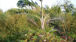 Na'alehu Bamboo Farm – Hawaii, USA