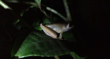 Night Walk - Monteverde Cloud Forest, Costa Rica