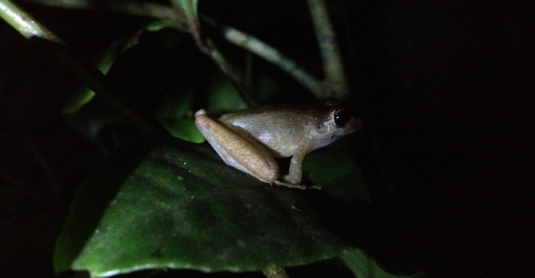 Night Walk – Monteverde Cloud Forest, Costa Rica