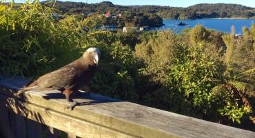 Stewart Island - New Zealand