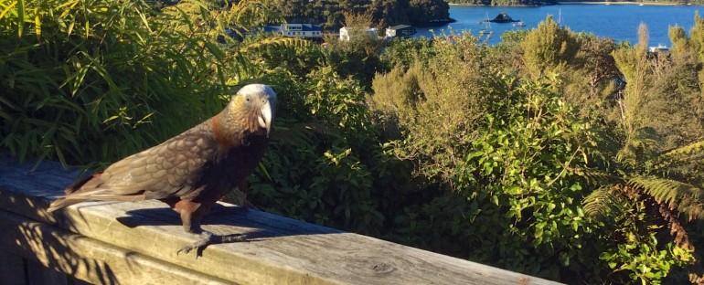 Stewart Island – New Zealand