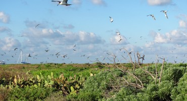 Tern Rookery - Dry Tortugas National Park, USA
