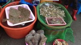 Fish Market – Oido, South Korea