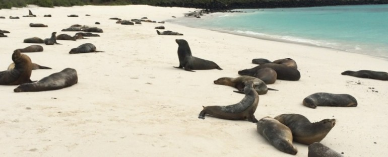Sea Lions at Gardner Bay – Galápagos Islands, Ecuador