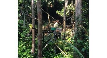 Semenggoh Wildlife Center - Sarawak, Malaysia