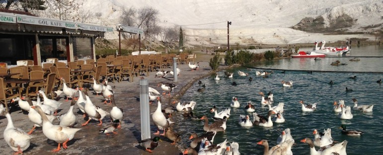 Ducks at Pamukkale – Hierapolis, Turkey