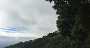 Morning Birds at Barú Volcano – Boquete, Panama