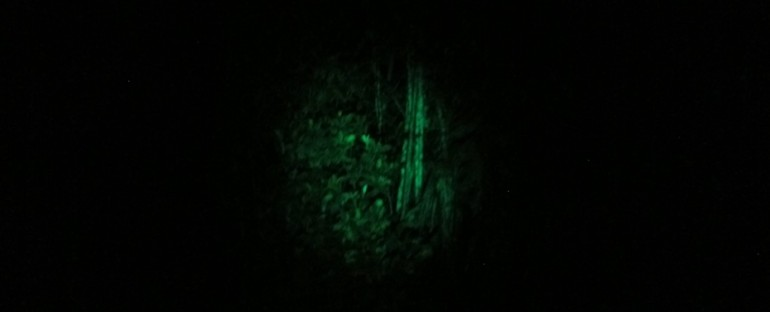 Nighttime – Bako National Park, Malaysia