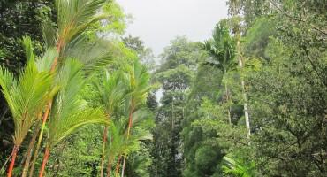 Semenggoh Wildlife Centre – Sarawak, Malaysia