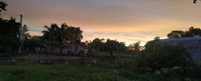Frogs – Santa Teresa, Nicaragua