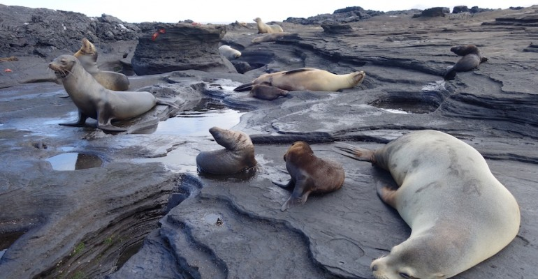 Sea Lion Rookery – Galápagos Islands, Ecuador