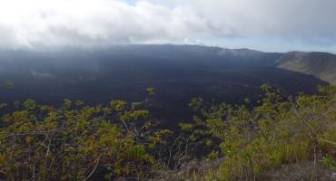 Sierra Negra Volcano Crickets – Galápagos Islands, Ecuador