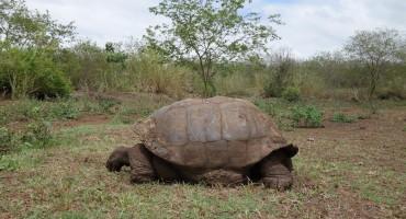 Tortoise Reserve - Galápagos Islands, Ecuador