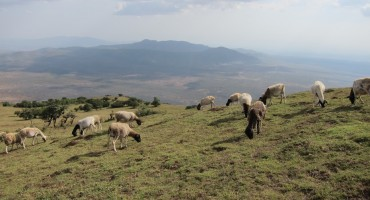 Grazing Animals at Ngong Hills – Nairobi, Kenya