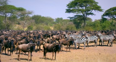 Wildebeest Migration – Serengeti National Park, Tanzania