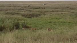 Lion Cubs – Serengeti National Park, Tanzania