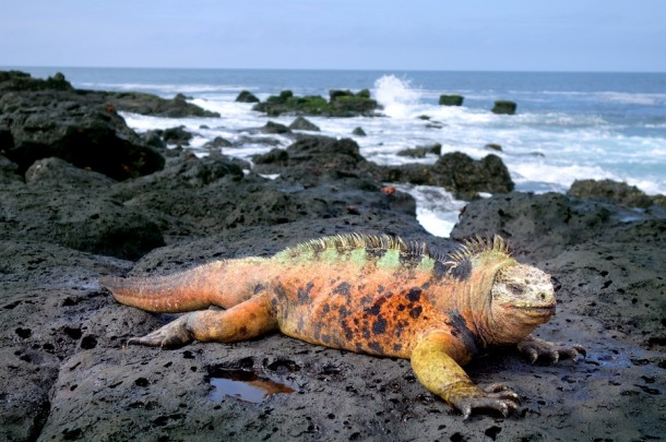 La Fe - Galápagos Islands, Ecuador