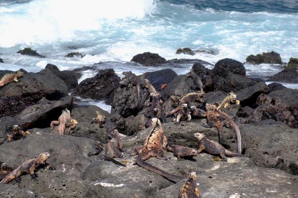 La Fe - Galápagos Islands, Ecuador2