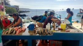 Puerto Ayora Fish Market – Galápagos Islands, Ecuador