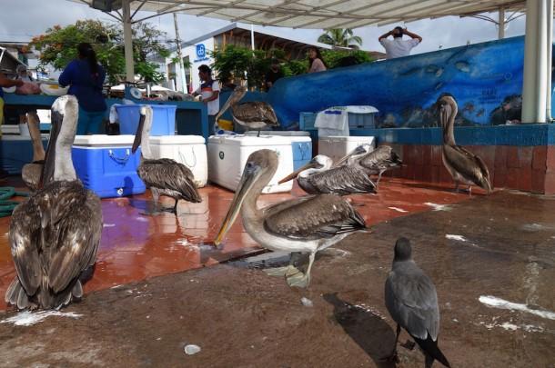 Puerto Ayora Fish Market - Galápagos Islands, Ecuador2