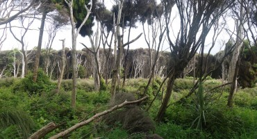 Living Forest – Curio Bay, New Zealand