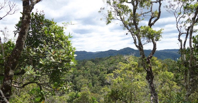Ranomafana National Park – Madagascar