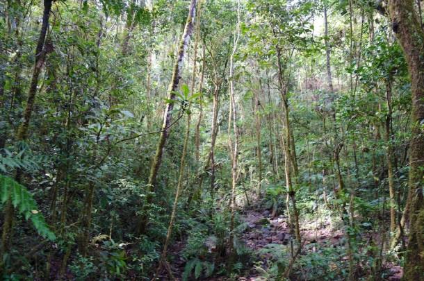 Ranomafana National Park – Madagascar2