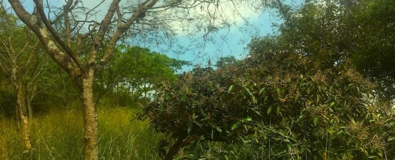 Parque Nacional Bataclán – Cali, Colombia