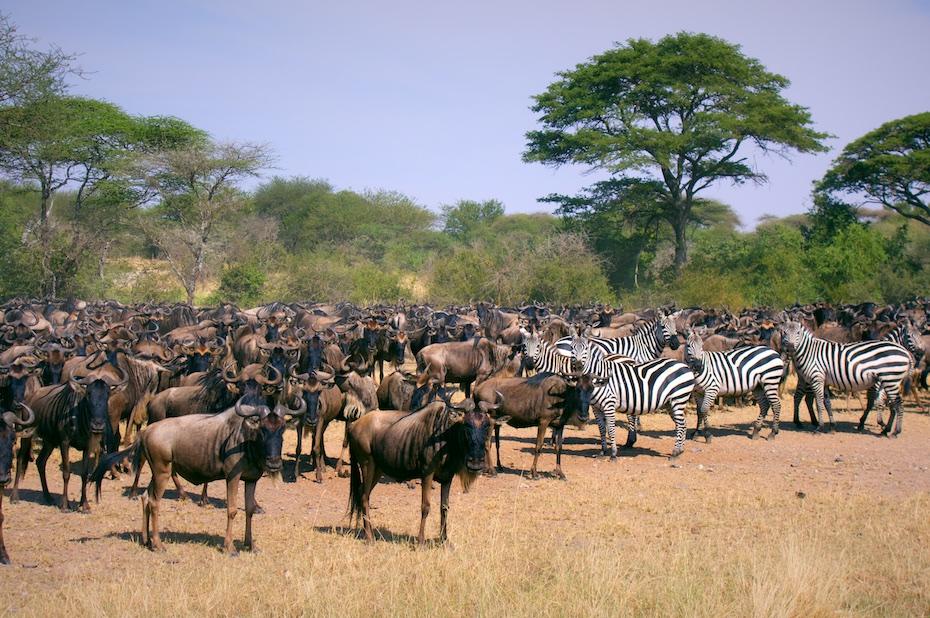 deal serengeti park